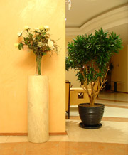 Hotel Flowers & Plant Displays